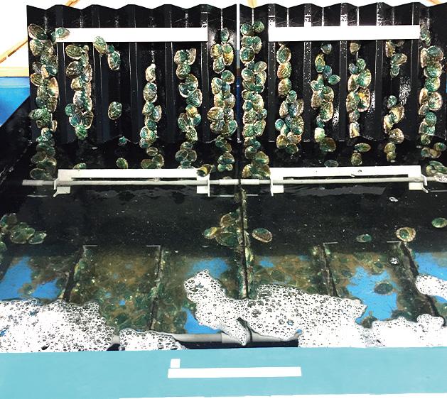 アワビ養殖システム